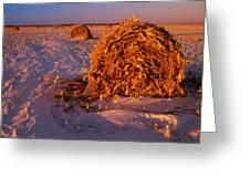 Corn Bales At Sunset, Dugald, Manitoba Greeting Card