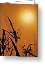 Corn Field Haze  Greeting Card