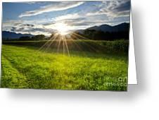 Corn Field In Backlight Greeting Card