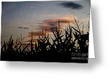 Corn Field With Orange Clouds Greeting Card
