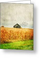 Corn Fields Of Kentucky Greeting Card by Darren Fisher
