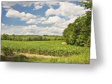 Corn Growing In Maine Farm Field Greeting Card
