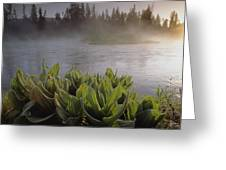 Corn Lilies Near Crescent Creek, Oregon Greeting Card