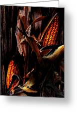 Corn Stalks Greeting Card