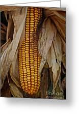 Corn Stalks Greeting Card