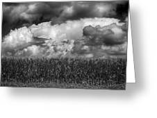 Cornfield And Clouds Greeting Card