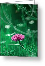 Cornflower Greeting Card