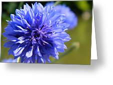 Cornflower Blue Greeting Card by Sharon Lisa Clarke