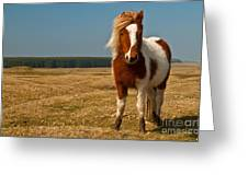 Cornish Pony Greeting Card