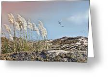 Coronado Island Pampas Grass Greeting Card