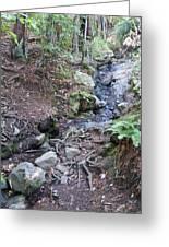 Corte Madera Creek On Mt Tamalpais Greeting Card