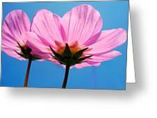 Cosmia Flowers Pair Greeting Card