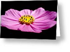 Cosmia Pink Flower Greeting Card