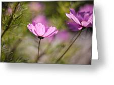 Cosmos Light Greeting Card