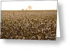 Cotton Field Donana Spain Greeting Card