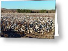 Cotton Landscape Protected 01 Greeting Card