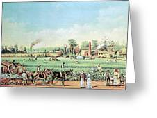 Cotton Plantation On The Mississippi Greeting Card by Photo Researchers