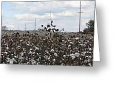 Cotton Ready For Harvest In Alabama Greeting Card
