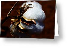 Cotton's Inner Light Greeting Card