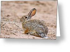 Cottontail Bunny Greeting Card