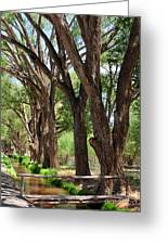 Cottonwood Desert Oasis - Utah Greeting Card
