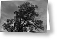 Cottonwood Silhouette Greeting Card