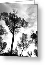 Cottonwood Silhouette Ser1 Greeting Card