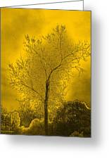 Cottonwood Tree April 2012 In Gold Greeting Card