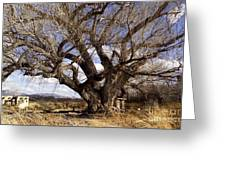 Cottonwood Tree At San Pedro House Greeting Card