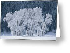 Cottonwood Trees With Frost Greeting Card
