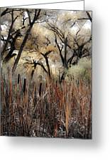Cottonwoods And Cat Tails Greeting Card by Denice Breaux