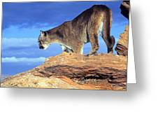 Cougar In The Sky Greeting Card