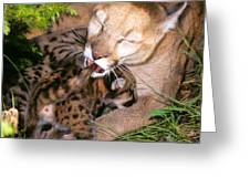 Cougar Mom Cleans Youngster Greeting Card