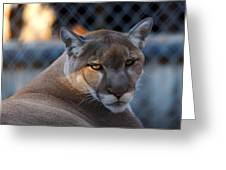 Cougar Portrait - Sad Eyes Greeting Card