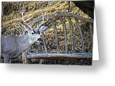 Country Buck Greeting Card