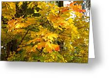 Country Color 10 Greeting Card