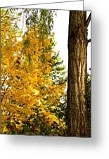 Country Color 19 Greeting Card