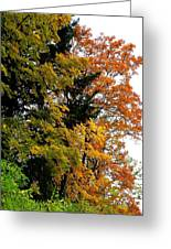 Country Color 2 Greeting Card