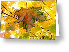 Country Color 21 Greeting Card