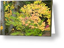 Country Color 23 Greeting Card