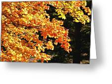 Country Color 26 Greeting Card