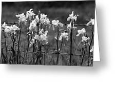 Country Flowers Greeting Card