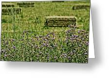 Country Gardens Greeting Card