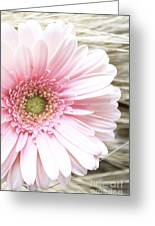 Country Pink Greeting Card