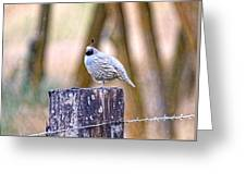 Country Quail Greeting Card