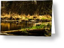 Country River Greeting Card