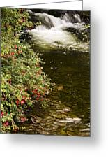 County Kerry, Ireland Fuchsia Bush Greeting Card