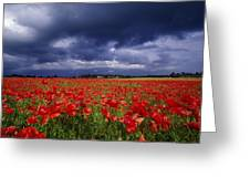 County Kildare, Ireland Poppy Field Greeting Card