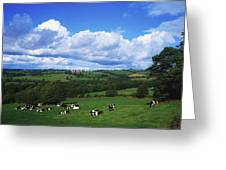 County Tipperary, Ireland, Dairy Cattle Greeting Card