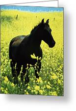 County Tipperary, Ireland Horse In A Greeting Card